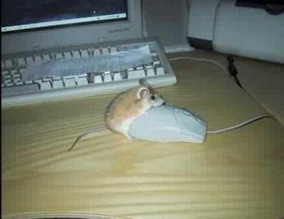 mouse_humping.jpg